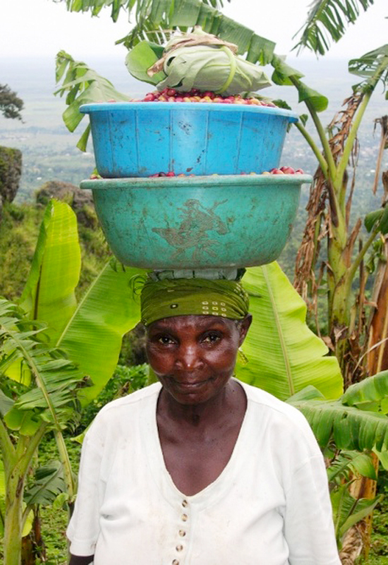 Copy of Uganda Bugisu, carrying red cherries to washing station copy