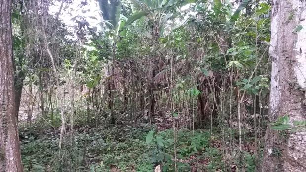 Exhibit A Jungle