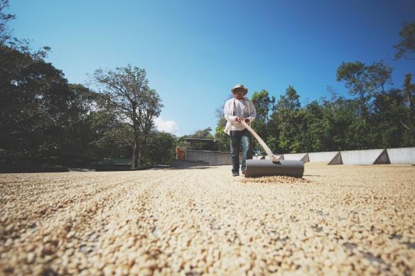 coffee-farmer-full