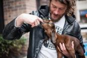 goat guy-1
