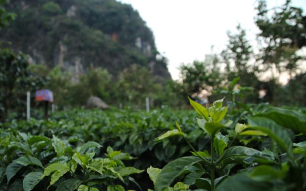 Guatemala-CafeImports-Imgs38