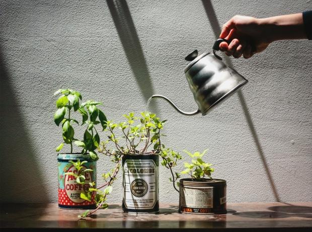 herb garden edited
