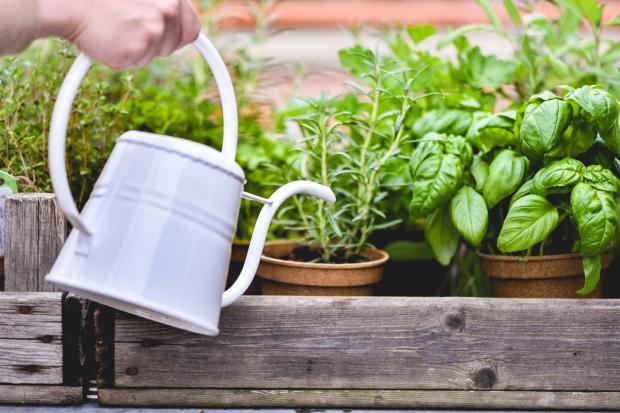 Tea-Garden-Blog-4