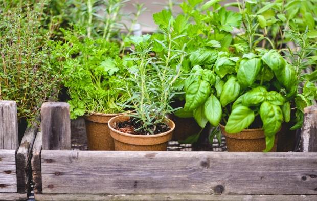 Tea-Garden-Blog-5