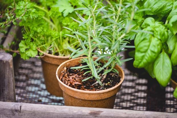 Tea-Garden-Blog-6