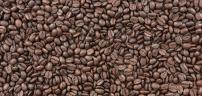 beans-1-2
